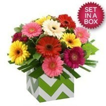 Bright Mixed Gerbera Arrangement
