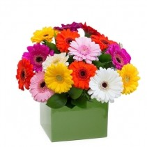 Bright and cheery flowers same day delivery - Ellie By Lily S Florist Send Flowers Australia Wide
