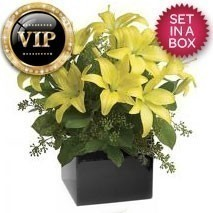 VIP Yellow Lily Arrangement