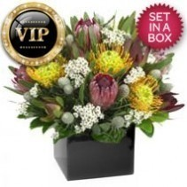 VIP Native Arrangement