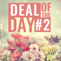 Deal Of The Day - Flower Arrangement